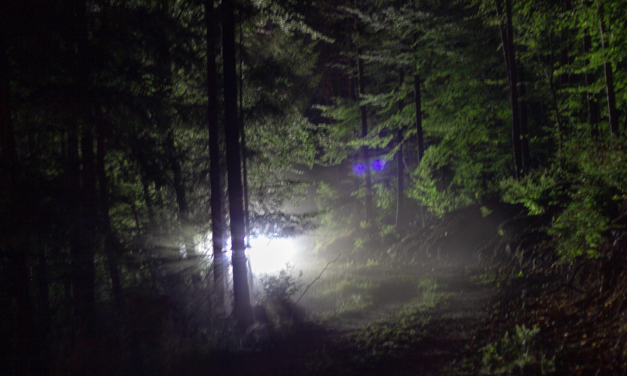 Das Ding da hinten im Wald